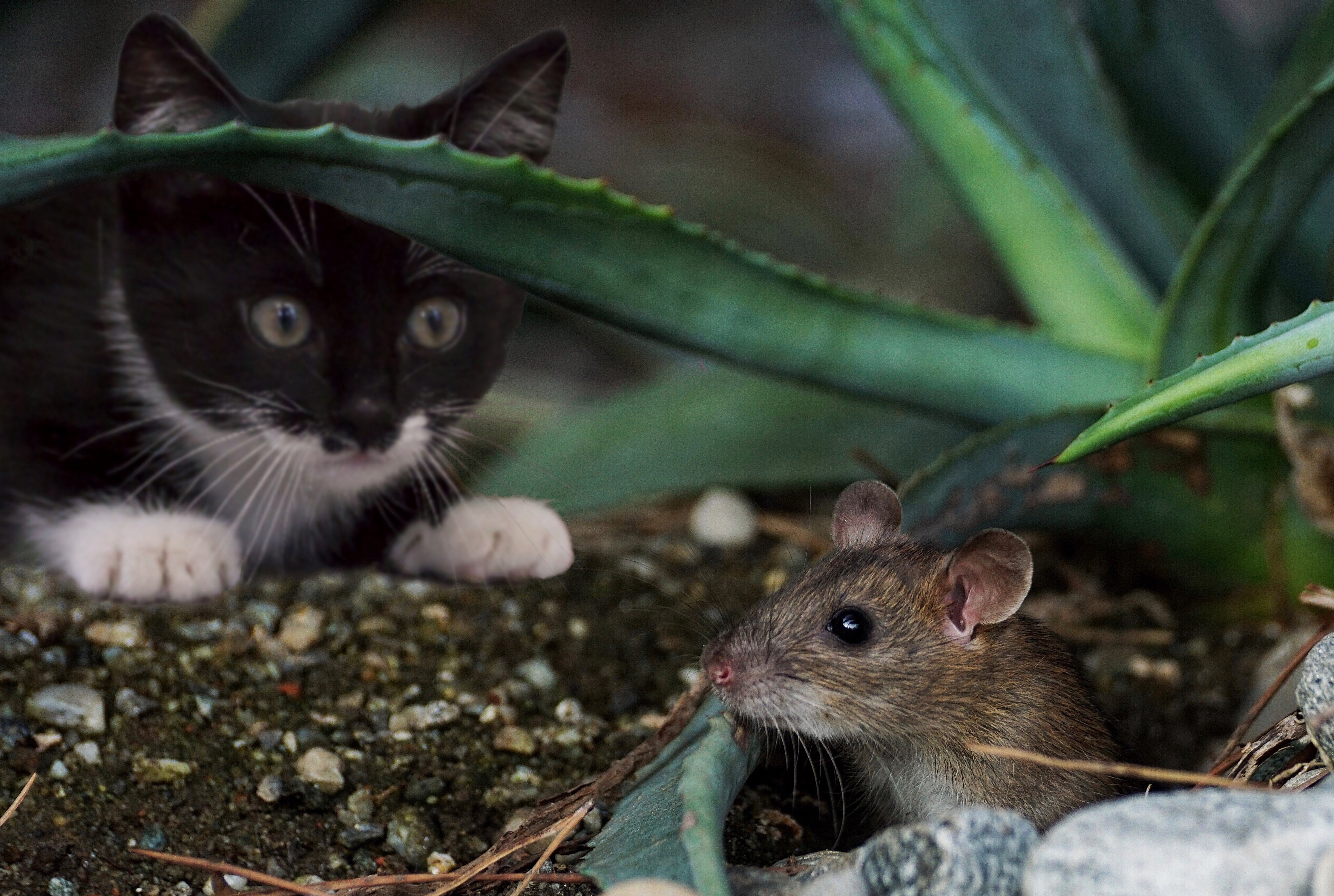 MM_Zeig mir Deine Maus Katze_Endbericht2