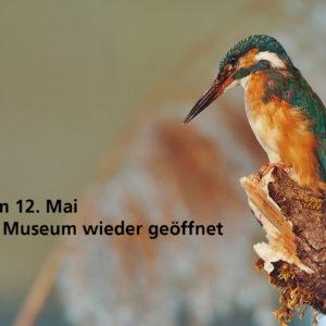 Naturmuseum wieder geöffnet