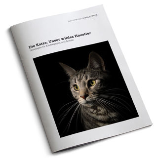 Katze_Cover_Web