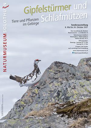 Teaserbild Plakat Gipfelstürmer