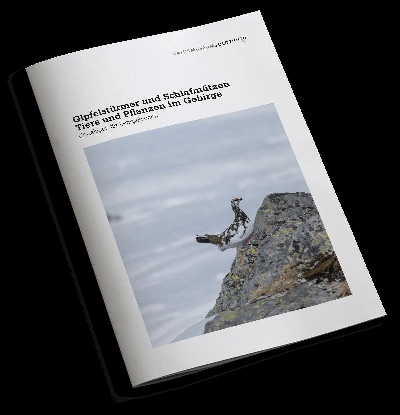 Gipfelstürmer_Cover